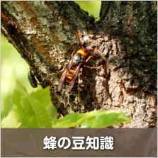 蜂の豆知識